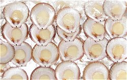 1/2 Shell Queensland Scallops - Roe Off. Half shell scallops